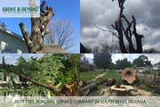 First-Rated Tree Removal Companies in South Bend